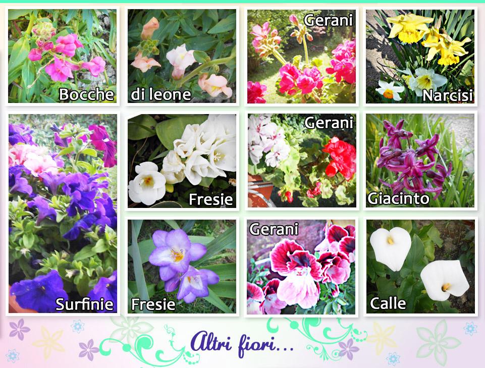 Nomi di tutti i fiori nomi di tutti i fiori fiori e piante for Fiori immagini e nomi